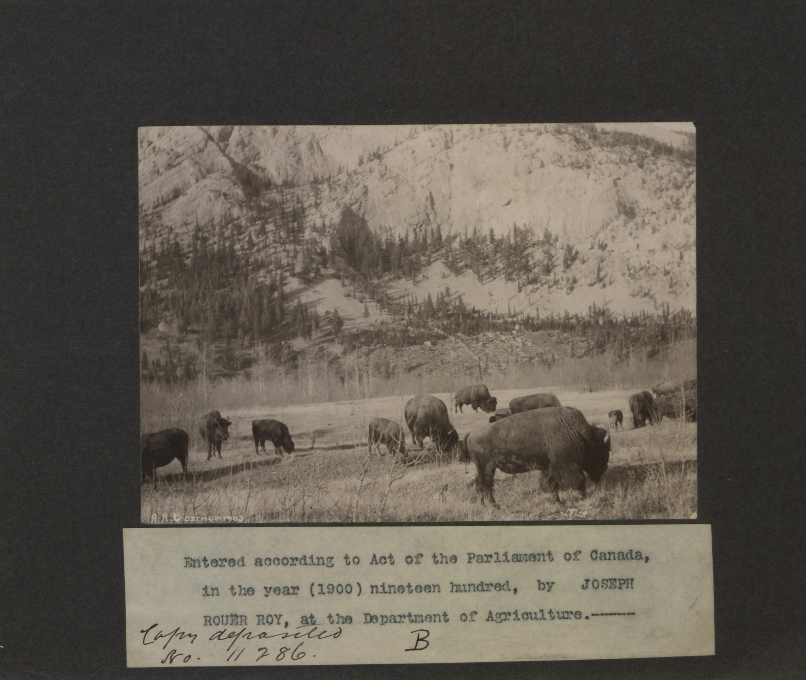 Buffalo herd at the foot of a mountain. Long description available.