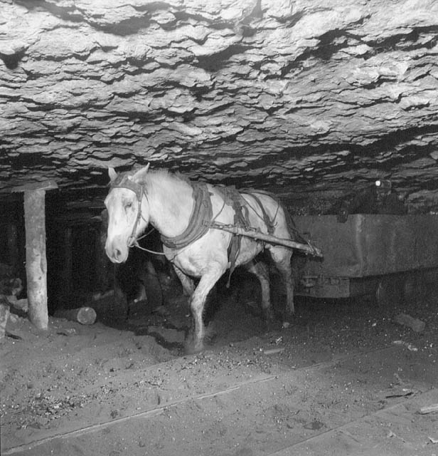 A horse pulls a minecart with a person in it underground.