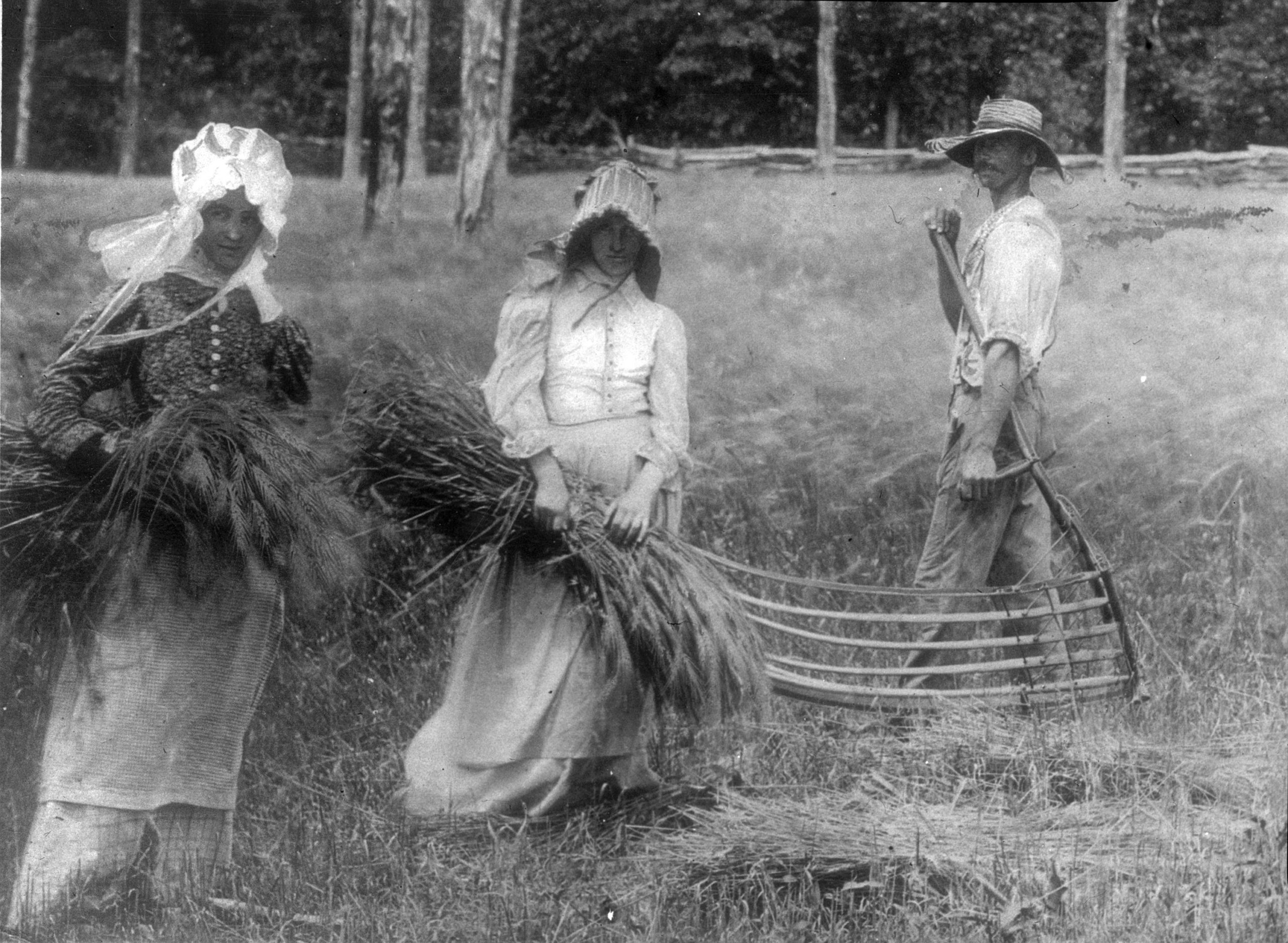 Two women and a man harvest grain with a hand machine.