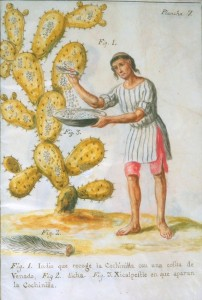 A person uses a deer tail to brush cochineal beetles off a cactus into a bowl.
