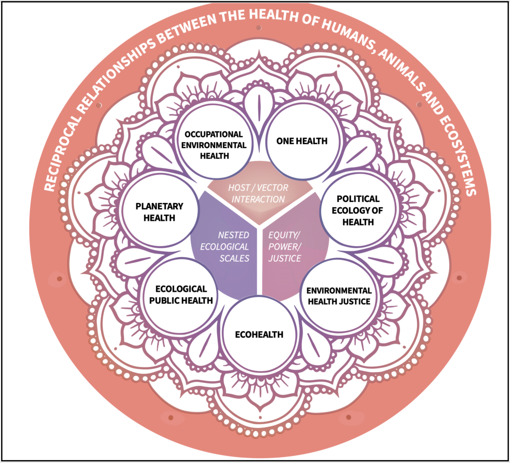 Chart detailing the relationships between human health and environmental health. Long description available.