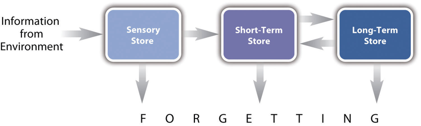 Figure 4.1 Representation of the Multistore Model of Human Memory. In the multistore model of human memory, information from the environment passes through a sensory store on its way to a short-term store, where it can be rehearsed, and then to a long-term store, where it can be stored and retrieved much later. This theory has been extremely successful at organizing old phenomena and predicting new ones.