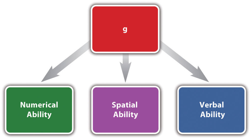 Figure 4.2 Representation of One Theory of Intelligence In this theory of intelligence, a general mental ability (g) influences each of three more specific mental abilities. Theories of this type help to organize a large number of statistical relationships among tests of various mental abilities.