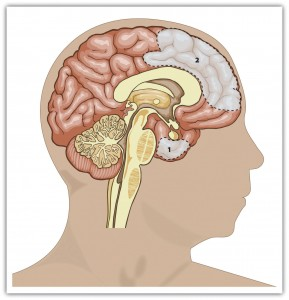 Figure 9.5 Key Brain Structures Involved in Regulating and Inhibiting Aggression