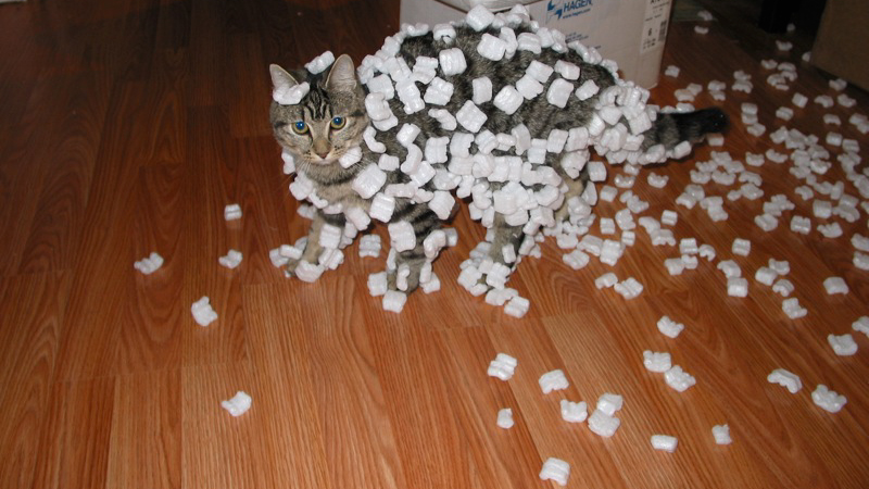 A photograph of a cat covered with Styrofoam peanuts