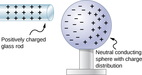 A microscopic view of polarization is shown. A positively charged glass rod with positive signs is close to a neutral conducting sphere with a charge distribution. The negative charges on the sphere are on the side near the rod and positive charges are on the side opposite from the rod.