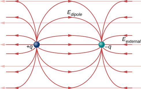 A dipole, consisting of a negative charge on the left and a positive charge on the right is in a uniform electric field pointing to the right. The dipole moment, p, points to the right. The field lines of the net electric field are the sum of the dipole field and the uniform external field, horizontal far from the dipole and similar to the dipole field near the dipole.