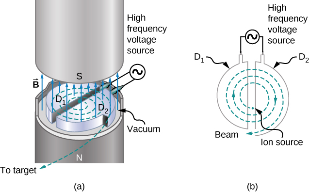 The path of ions in a cyclotron is illustrated. The dees are two halves of a circle, slightly separated from each other to form a gap. A high frequency voltage source connects the dees across the gap. The particles are generated by an ion source near the center and spiral outward. The magnetic field is perpendicular to the plane of the motion.