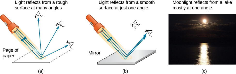 Figure a shows the rays of light from a flashlight falling on a page of paper. The light gets reflected at many angles as the surface is rough. Reflected light reaches eyes placed at many location. Figure b shows the rays of light from a flashlight falling on mirror. All of the light gets reflected at the same angle since the surface is smooth. Reflected light only reaches an eye placed so that the reflected beam hits it. An observer not at the angle of the reflected light does not see it. Figure c shows a photograph of moonlight falling on a lake. The lake's shiny surface reflects it. A bright , slightly rippled strip of moonlight is seen reflecting from the lake on a dark background.