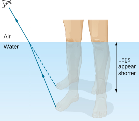 The figure is illustration of the formation of the image of a leg under water, as seen by a viewer in the air above the water. A ray is shown leaving the leg and refracting at the water air interface. The refracted ray bends away from the normal. Extrapolating the refracted ray back into the water, the extrapolated ray is above the actual ray so that the image of the leg is above the actual leg and the leg appears shorter.
