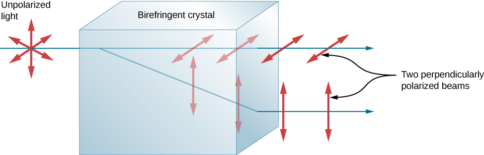 The figure shows a horizontal, unpolarized ray of light incident on a block labeled birefringent crystal. The ray is perpendicular to the face of the crystal where it enters it. The incident ray splits into two rays when it enters the crystal. One part of the ray continues straight on. This ray is horizontally polarized. The other part of the ray propagates at an. This ray is vertically polarized. The second ray refracts upon leaving the crystal such that the two rays are parallel outside the crystal. The rays are labeled as two perpendicularly polarized beams.