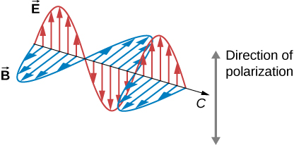 A part of an electromagnetic wave moving with velocity c is shown at one instant in time. The two vector components, E and B, are shown and are perpendicular to one another and to the direction of propagation. The vectors representing the magnitude and direction of E, shown as arrows whose tails lie on the line of propagation of the wave, form a sine wave in one plane. Similarly, the B vectors form a sine wave in a plane perpendicular to the E wave. The E and B waves are in phase. The direction of polarization is given by the direction of the E vectors.