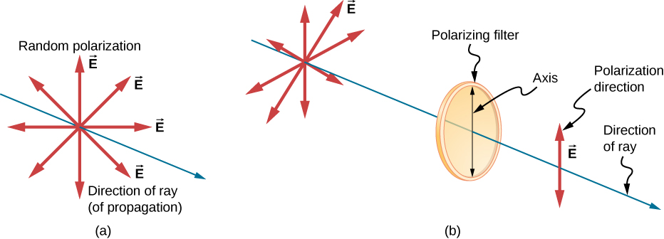 Figure a shows a slender blue arrow pointing out of the page and to the right that is labeled direction of ray. Eight red arrows emanate from a point on the ray and are labeled as vectors E. These arrows are all in a plane perpendicular to the ray and are uniformly distributed around the ray. They are labeled as representing a random polarization. In figure b, a similar but longer ray is shown with the same red arrows emanating from a point near the left end of the ray. Farther to the right on the same ray is a thin rectangle with six equally spaced vertical slits. This rectangle is labeled polarizing filter. A vertical double headed arrow on its surface is labeled axis. To the right of the filter, centered on the ray, is a single blue double headed arrow oriented vertically that is labeled E and direction of polarization.
