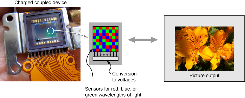 """A photograph of a charge coupled device is shown. A small part of this is enlarged and shows several pixels with red, blue and green squares. This is labeled """"sensors for red, blue or green wavelengths of light"""" and """"conversion to voltages"""". A photograph of flowers is shown, labeled """"picture output""""."""