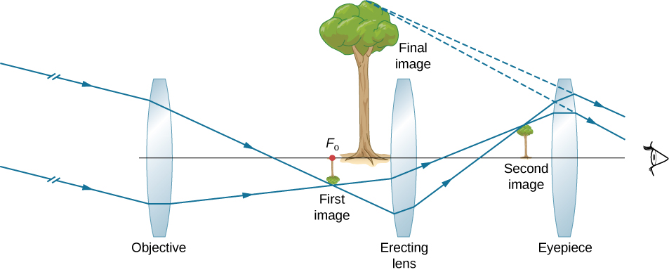 Parallel rays at an angle to the optical axis enter a bi-convex objective lens and converge on the other side to form a tiny, inverted image of a tree at the focal point of the objective. From here, the rays pass through another bi-convex lens labeled erecting lens and converge on the other side to form a small upright image of the tree. From here, the rays pass through a bi-convex eyepiece and enter the eye. The back extensions of these converge to form an enlarged upright image of the tree labeled final image. This lies between the first image and the erecting lens.