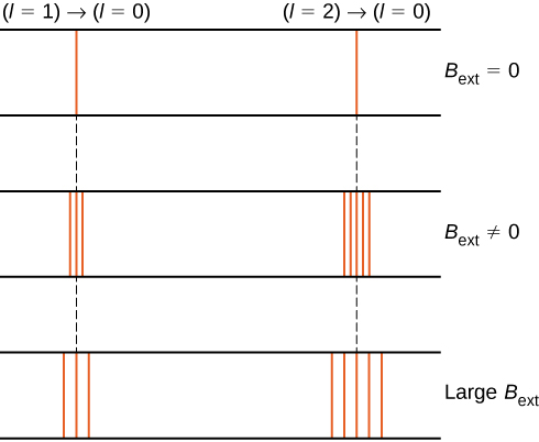 The figure shows the effect of magnetic field, B sub ext, on two different spectral lines, corresponding to the l=1 to l=0 transition on the left and the l=2 to l=0 transition on the right. The spectra are shown for no external field, for a non zero external field and for a large external field. With no external field, both transitions appear as single lines. In the second case, when magnetic field is applied, the spectral lines split into several lines; the line on the left splits into three lines. The line on the right splits into five. In the third case, the magnetic field is large. The left line is again split into three lines and the right into five, but the split lines are farther apart than they are when the external magnetic field is not as strong.