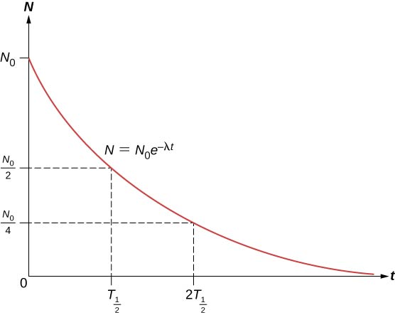 A graph of N versus t is shown. It is labeled N equal to N subscript 0 e to the power minus lambda t. The value of N is maximum, N subscript 0, at t =0 and it reduces with time till it reaches 0. At t = T subscript half, N = N subscript 0 by 2 and at t = 2T subscript half, N = N subscript 0 by 4.