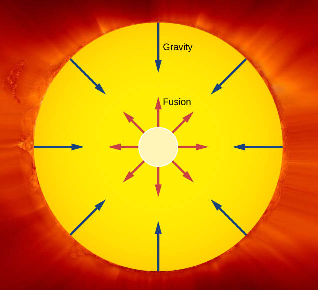 The figure shows the Sun as a circle and the Sun's core as a smaller concentric circle within it. Arrows labeled fusion radiate outwards from the core. Arrows labeled gravity radiate inwards from the surface.