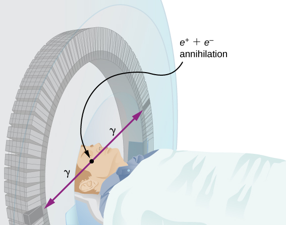 The figure of a person lying with his head within a circular chamber. Two rays labeled gamma radiate outwards from his head. Their point of origin is labeled e positive plus e negative annihilation.